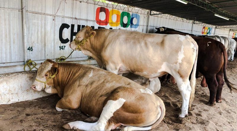 3 acciones contra la entrada ilegal de ganado a México